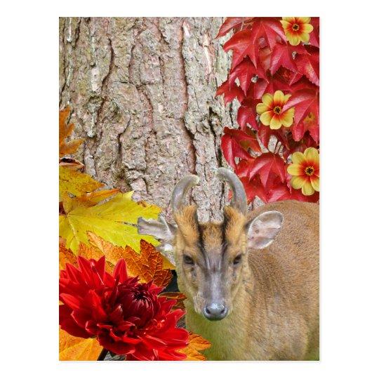 Ciervos del arbolado, caída roja rústica del postales