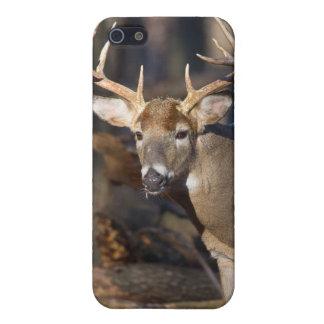 Ciervos del dólar iPhone 5 funda