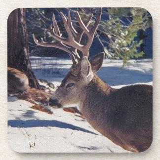 Ciervos del invierno posavasos