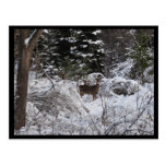 Ciervos del invierno postales