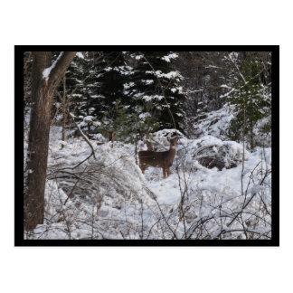 Ciervos del invierno postal