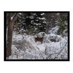Ciervos del invierno tarjetas postales