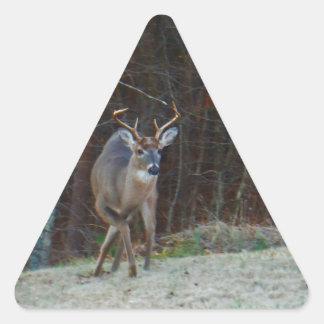 Ciervos del macho del dólar, marcando su tierra pegatina triangular