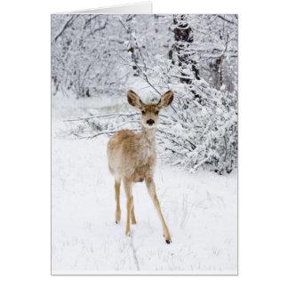 Ciervos del navidad tarjeta