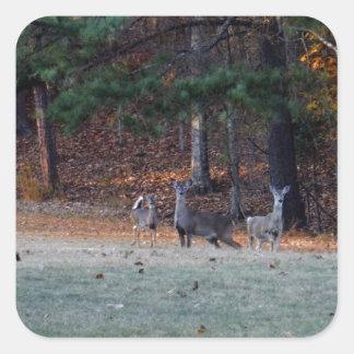 Ciervos del otoño en la distancia calcomanías cuadradas personalizadas