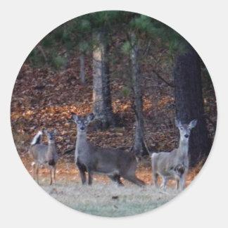 Ciervos del otoño en la distancia pegatina redonda
