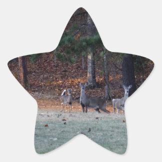 Ciervos del otoño en la distancia pegatinas forma de estrellaes