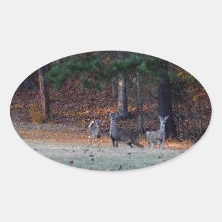 Ciervos del otoño en la distancia calcomanía de oval