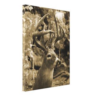 Ciervos del trofeo lienzo envuelto para galerias