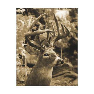 Ciervos del trofeo impresión en lienzo estirada
