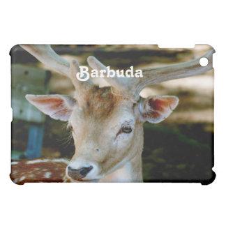 Ciervos en barbecho de Barbuda