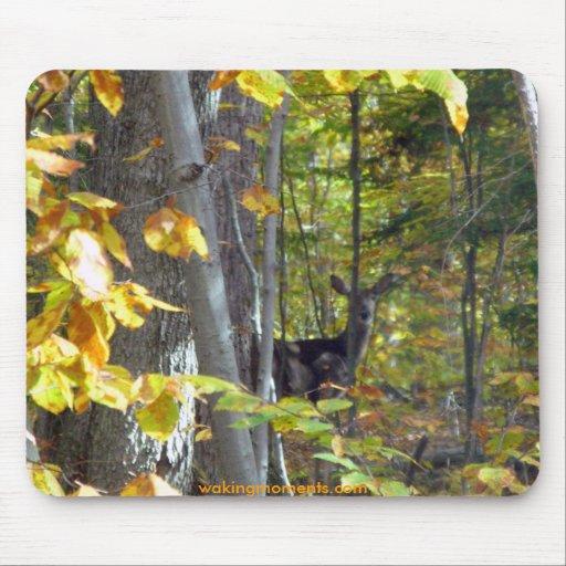 Ciervos en bosque entre las hojas de oro tapetes de raton