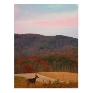 Ciervos en campo de golf de la puesta del sol tarjetas postales