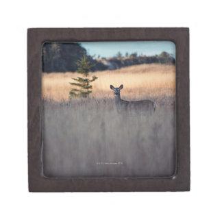 Ciervos en campo de la hierba alta caja de recuerdo de calidad