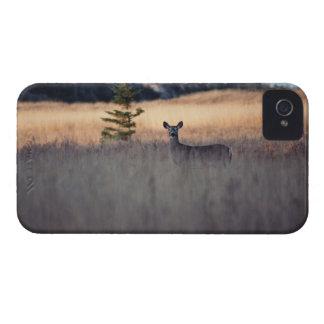 Ciervos en campo de la hierba alta iPhone 4 cárcasa