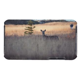 Ciervos en campo de la hierba alta iPod touch cobertura