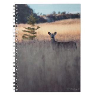 Ciervos en campo de la hierba alta libro de apuntes