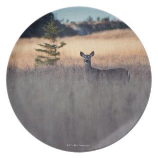 Ciervos en campo de la hierba alta platos