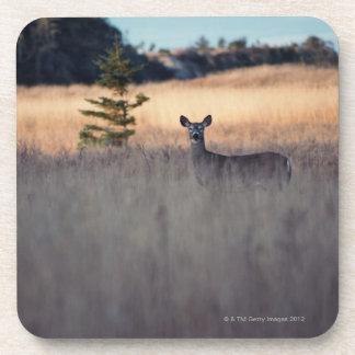 Ciervos en campo de la hierba alta posavasos