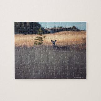 Ciervos en campo de la hierba alta puzzle con fotos