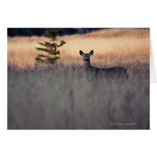 Ciervos en campo de la hierba alta felicitación