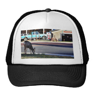 Ciervos en ciudad gorras