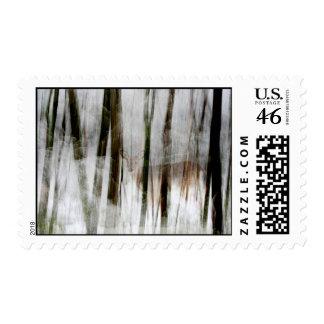 Ciervos en el franqueo de maderas del invierno