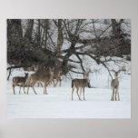 Ciervos en el lago lawrence impresiones
