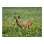 Ciervos en el nuevo bosque tarjetas postales