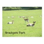 Ciervos en el parque de Bradgate Postal