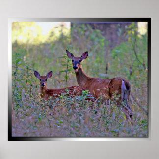 ciervos en el poster del arbolado de la mañana póster