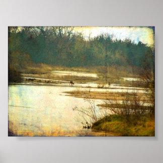 Ciervos en el río Platte cerca de Kearney Nebrask Poster