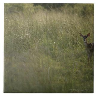 Ciervos en hierba alta azulejo cerámica