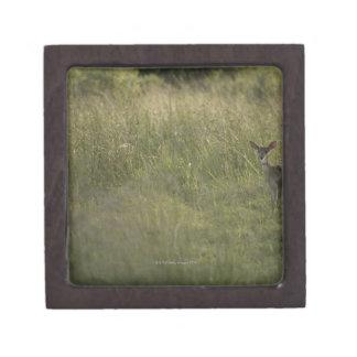 Ciervos en hierba alta cajas de joyas de calidad