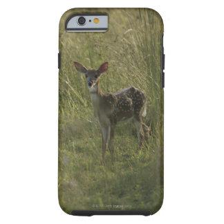 Ciervos en hierba alta funda de iPhone 6 tough