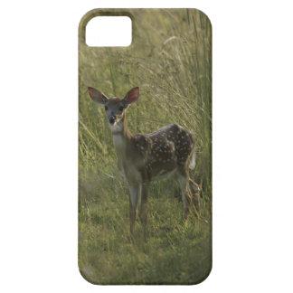 Ciervos en hierba alta iPhone 5 Case-Mate protector