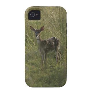 Ciervos en hierba alta Case-Mate iPhone 4 carcasas