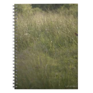 Ciervos en hierba alta libreta espiral