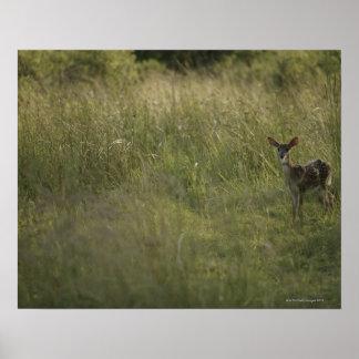 Ciervos en hierba alta poster