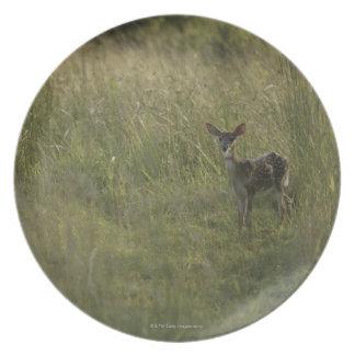 Ciervos en hierba alta plato para fiesta