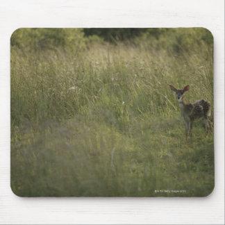 Ciervos en hierba alta tapetes de raton