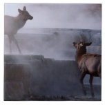 Ciervos en la formación de roca azulejo cuadrado grande