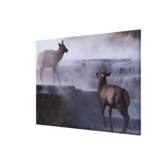 Ciervos en la formación de roca lona envuelta para galerias
