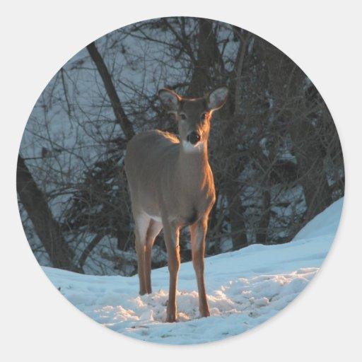 Ciervos en la nieve etiqueta redonda