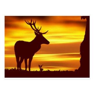 Ciervos en la oscuridad postales
