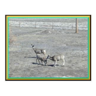 Ciervos en la postal de la yarda