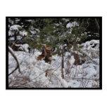 Ciervos en las maderas tarjeta postal