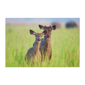 Ciervos en los prados, parque nacional del Sambar Impresion De Lienzo