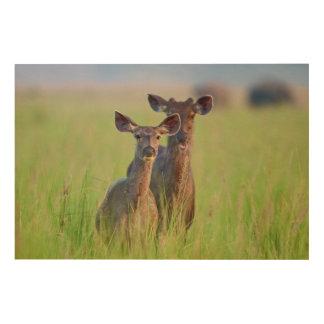 Ciervos en los prados, parque nacional del Sambar Impresión En Madera