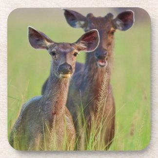 Ciervos en los prados, parque nacional del Sambar Posavasos De Bebida